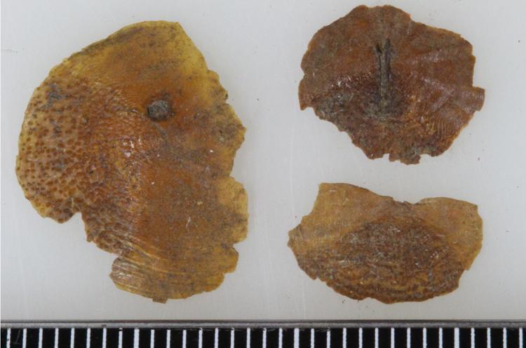 縄文時代の魚鱗