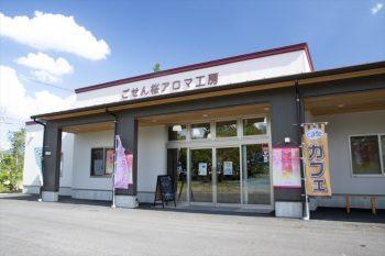 【五泉市】桜、チューリップ…五泉に出かけたら立ち寄りたい「ごせん桜アロマ工房」
