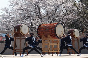 【聖籠町】聖籠町・桜の名所。期間中はライトアップも開催