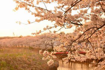 【新潟市江南区の銘品がもらえるかも!】 江南区のインスタ映えスポットを見つける「江南区彩発見フォトコンテスト」を開催中!
