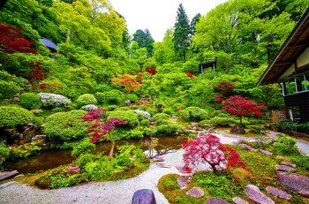 【村上市】町屋、寺、武家地区の庭・花・盆栽・山野草などを無料公開