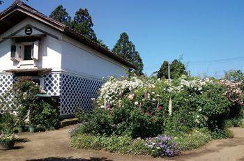 【聖籠町】二宮家庭園「静勝園」とバラ園