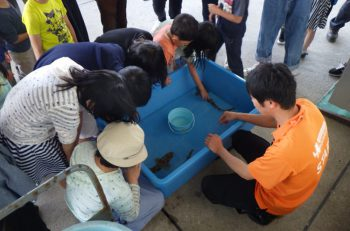 トラザメに触れられる貴重なチャンス 長岡市寺泊水族博物館