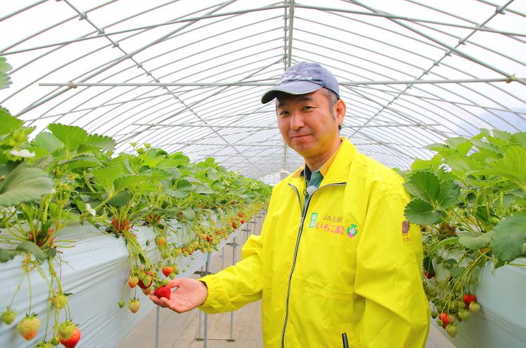 越後姫農家の藤田さん。「JA北越後いちご部会」の部会長を務める