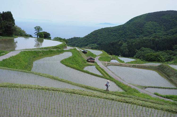田植え直後の岩首集落の棚田。晴れていると新潟市の街や弥彦山なども見えます