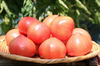 幻のトマトに遭遇!? 上越特産「直江津トマト」が初夏にぴったりな一品に 【NSTスマスタ「とれたて! えいっとレシピ」】