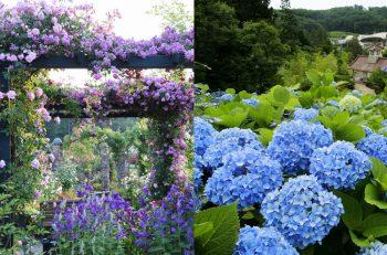 香り豊かなバラが咲く「ばらまつり」と、18品種18,000本の「あじさいまつり」を楽しもう!