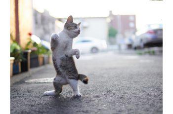 かわいすぎて、美しすぎる ねこ、ネコ、猫の写真作品多数!
