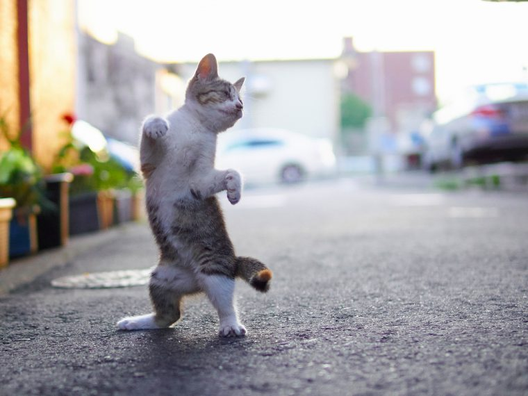 『のら猫拳』(C)久方広之