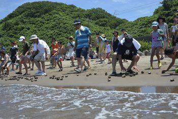 【出雲崎町】井鼻海水浴場の海開きを記念してサザエのつかみ取りを開催!