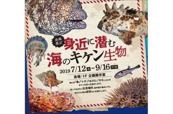 海に潜むキケンとは? 新潟の海に生息している気をつけるべき海洋生物を紹介