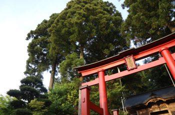 とっても寛大な旦飯野神社の魅力を存分に|阿賀野開運旅