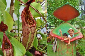 食虫植物が虫を捕えるしくみを楽しく学ぼう。自由研究の参考にもなるよ!