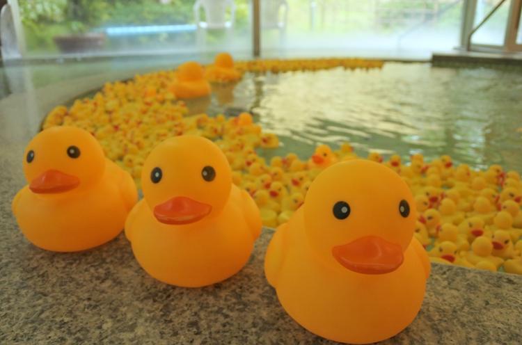 お風呂では2,000匹のアヒルたちがお出迎え☆