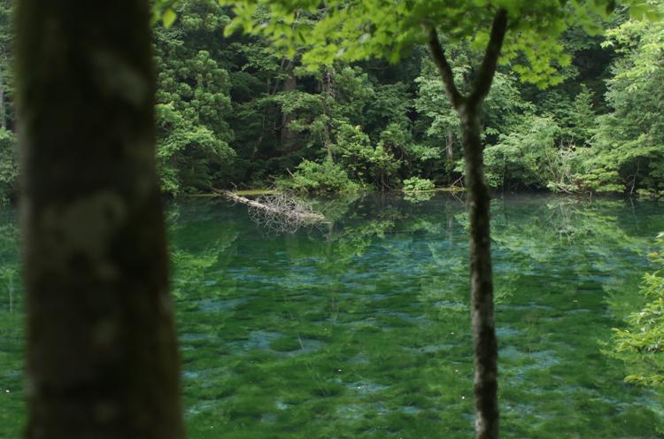 新潟県森林浴の森百選にも選ばれている龍ヶ窪
