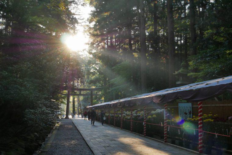 弥彦山を背景に樹齢400年を超えるスギやケヤキに包まれた彌彦神社。一足踏み入れるだけで不思議なパワーを感じられる