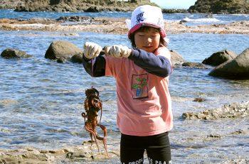 【粟島浦村】粟島でタコ捕りを楽しむツアー