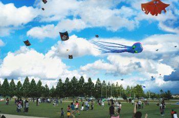 今年は42畳の「スター・ウォーズ大凧」が揚がる! アルパカもくるよ