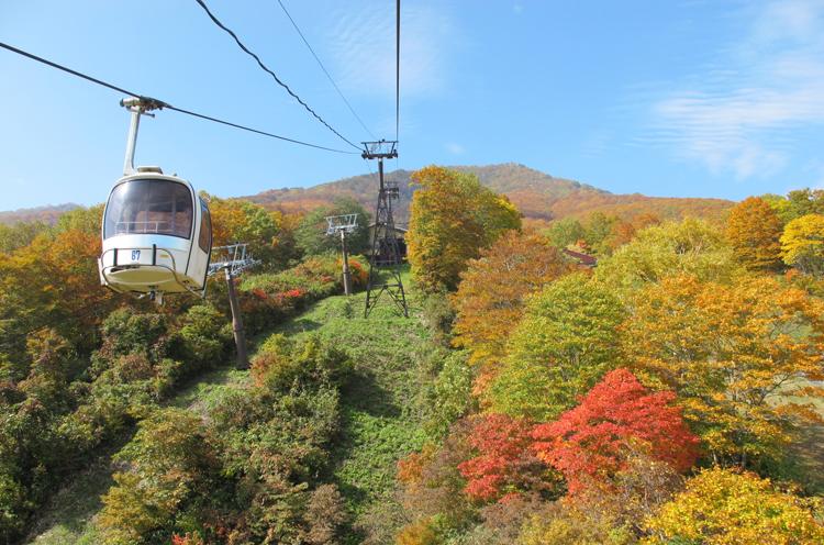 黄、赤、オレンジと鮮やかに色づいた紅葉が一面に広がります