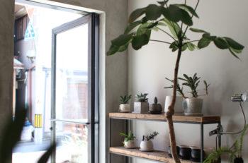 珍しい観葉植物を求めて沼垂テラス商店街へ|新潟市沼垂東