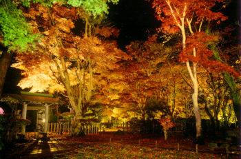 【長岡市】漆黒の夜空に浮かびあがるもみじは一見の価値あり|旧越路町神谷