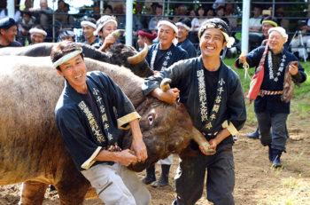 【小千谷市】いよいよ今年の千秋楽! 迫力満点の牛の角突きを見に行こう