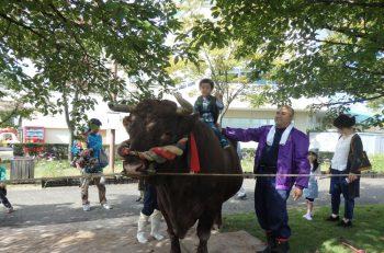 新潟県畜産物がおいしい!でっかい闘牛もいるよ