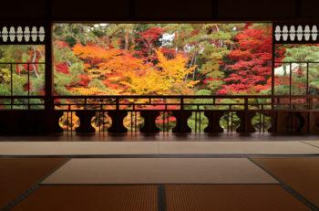 秋の日本庭園は息をのむ美しさ|新潟市中央区古町