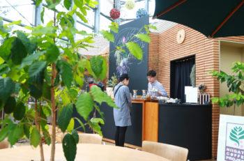 コーヒー豆がなる木を観察しながら植物園でコーヒーを飲もう