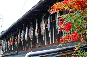 村上の風物詩「鮭塩引き街道」。塩引き鮭を味わおう|村上市