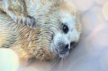 マリンピア日本海にいる生き物などの写真が展示されます