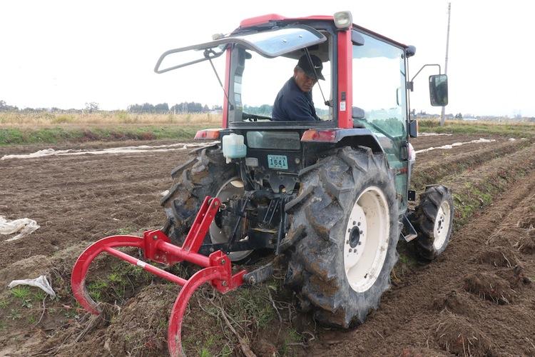 収穫は9月から11月中頃に実施