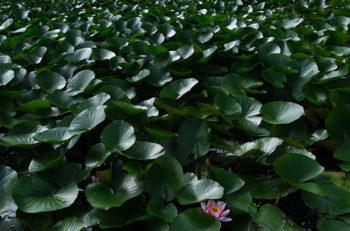 全国&新潟の自然、四季を切り取る写真展