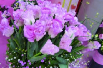 冬でも新潟市は花がいっぱい! 新潟市内産の花を楽しもう