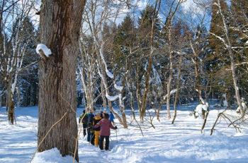 【妙高市】スノーシューを履いて雪の森を散策しよう!