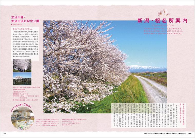 『県内桜の名所』特集。今年は開花・満開時期ともに早そうですね! 見ごろの時期を逃さないように