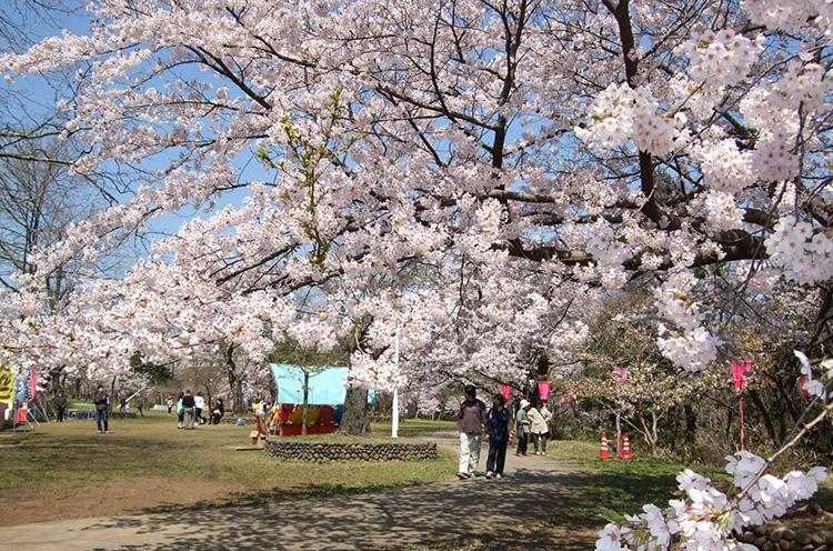 【詳しい情報はクリック】赤坂山公園