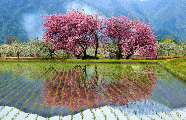 『信州の春』鍬塚長市