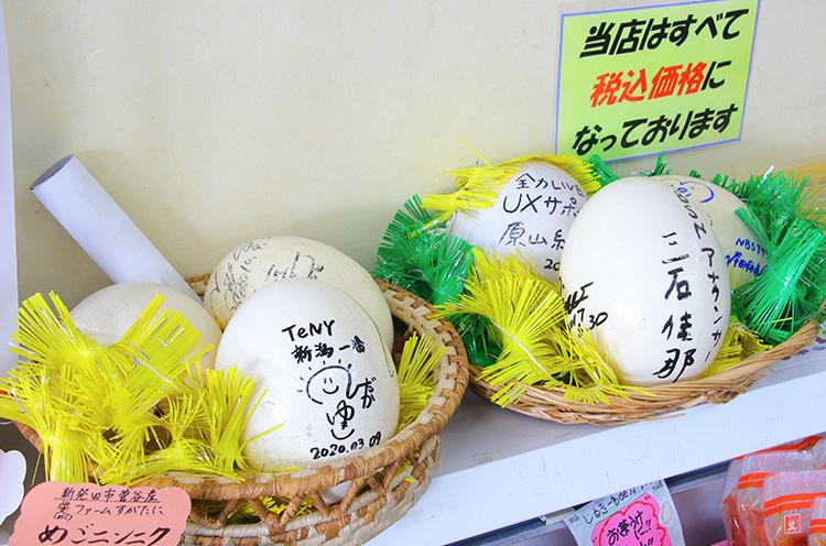 ダチョウの卵の殻には、色紙がわり(?)にサインが!