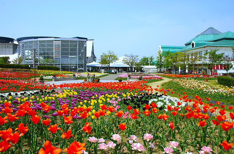 花畑から、アピール館、バザール館を望む