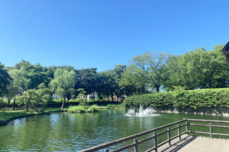 鮭公園にある大池。鯉がたくさん泳いでます!