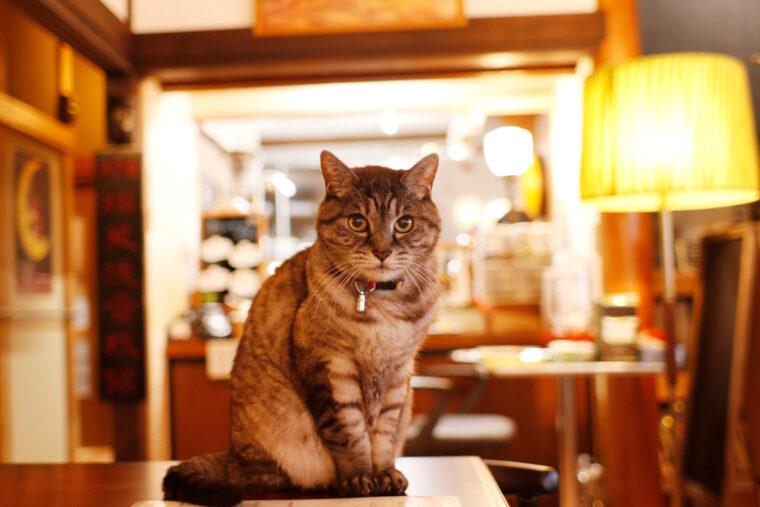 「名誉看板猫」のリッキー。昨年5月に17歳で天に召されましたが、今もたくさんの人たちの心の中で生き続けています