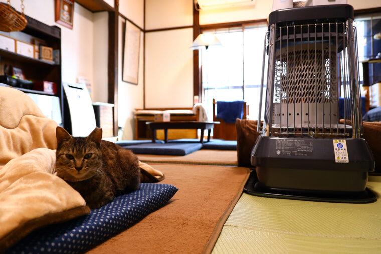 1 階の居間スペースで猫ちゃんたちと一緒にくつろげま~す