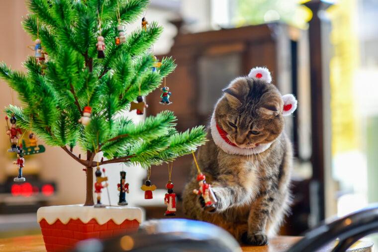 はる クリスマスver.