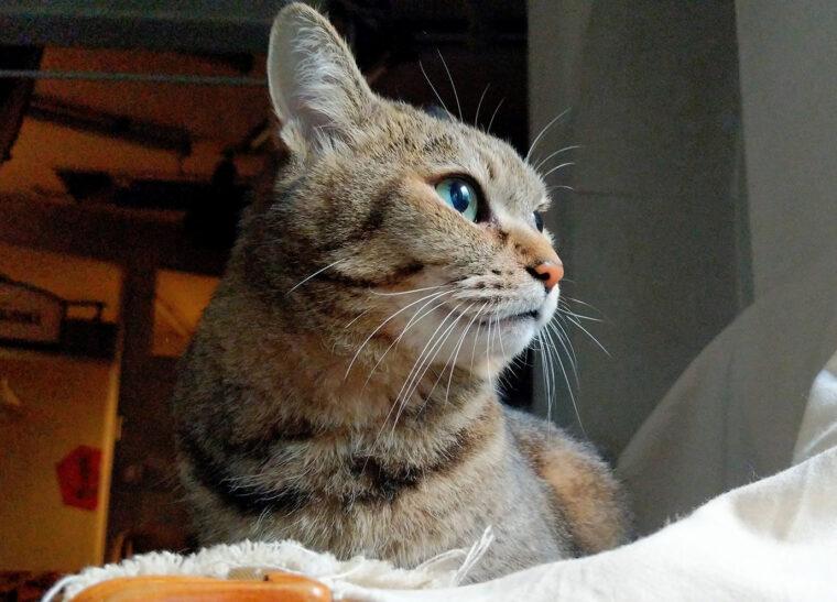 """猫がもっともきれいに映る""""キメ角度"""" を探してみて"""