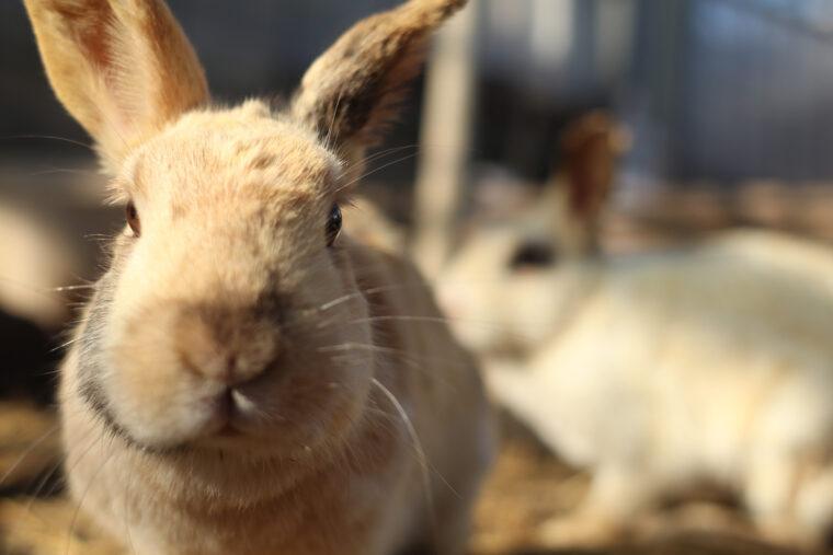 ウサギやヤギもいるよ♪