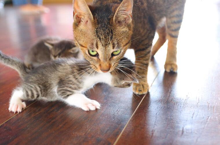 看板猫のノアと生まれたばかりの子猫たち