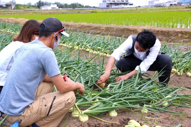 飛田アナも収穫を体験。「結構、手応えがありますね。大地にしっかり根を生やして栄養をとっているんですね」