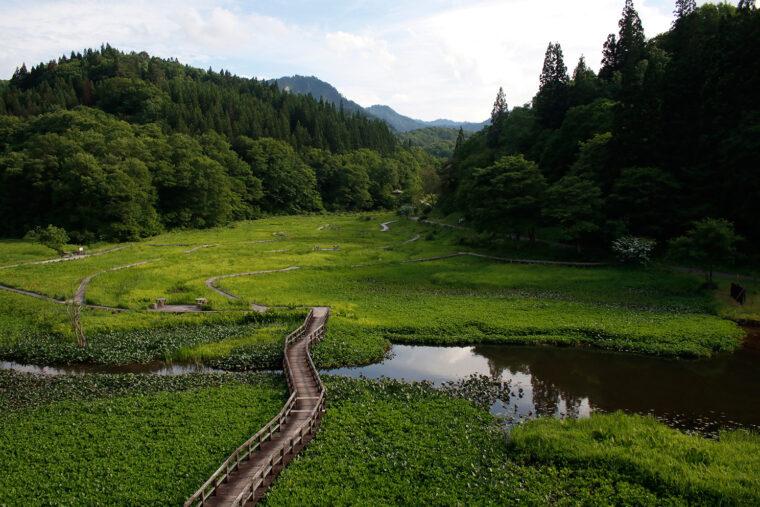 見晴らし台からは湿原全体を一望