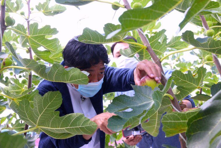 収穫体験をする飛田アナ